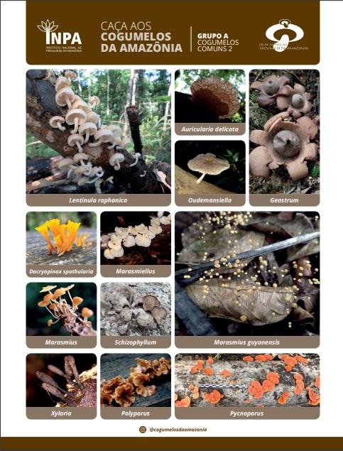 Hunting Amazonian Fungi 2