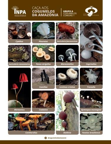 Hunting Amazonian Fungi 1