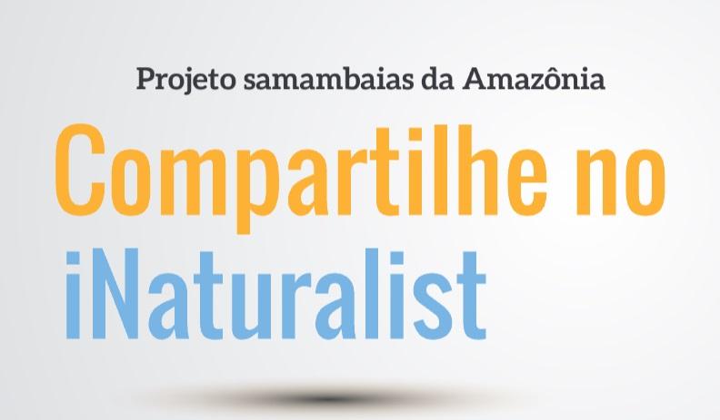 /Projeto samambaias da Amazônia